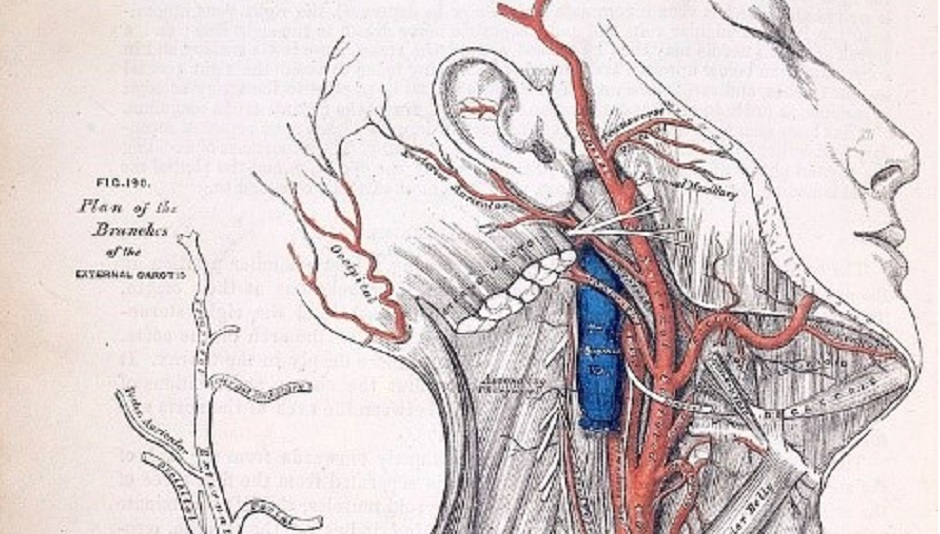 Grays Anatomy The Alien World Of The Human Body
